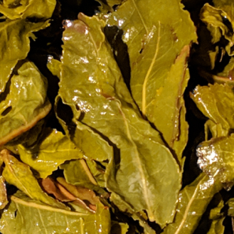 TieGuanYin_goldenmoon_Wet002